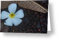 Single Plumeria  Greeting Card