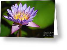 Single Purple Water Lily Number One Greeting Card