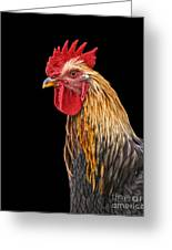 Single Rooster Greeting Card