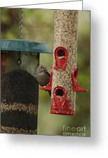 Single Songbird At Feeder Greeting Card
