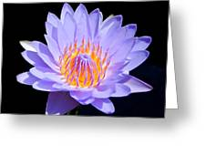 Single Water Lily Greeting Card