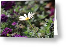 Single White Daisy On Purple Greeting Card