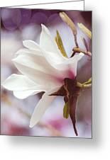 Single White Magnolia Greeting Card