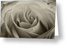 Single White Rose - 2 Greeting Card