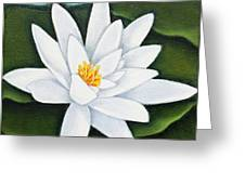 Single White Water Lily Greeting Card