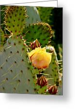Single Yellow Cactus Bloom 050715a Greeting Card