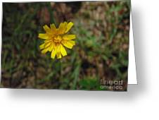 Single Yellow Flower Greeting Card