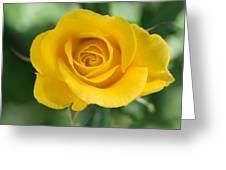 Single Yellow Rose Greeting Card