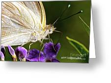 Sipping Purple Greeting Card