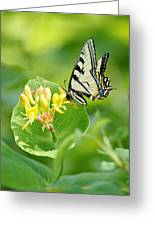 Sipping Swallowtail Greeting Card
