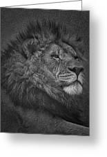 Sir Lion Greeting Card
