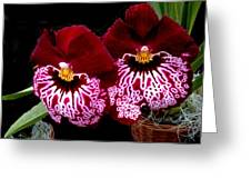 Sister Orchids Greeting Card