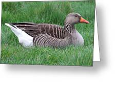 Sitting Goose Greeting Card