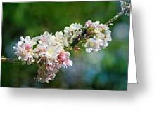 Sitting Guard In The Cherry Blossoms Greeting Card
