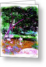 Sitting In The Shade Greeting Card