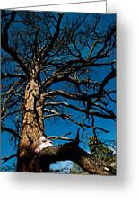 Sitting In Tree 2 Greeting Card by Scott Sawyer