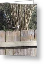Sitting On A Fence  Greeting Card