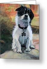 Sitting Pretty - Black And White Puppy Greeting Card
