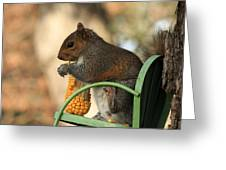 Sitting Squirrel Greeting Card