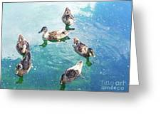 Six Ducks Swim Together Greeting Card