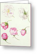 Six Heads Of Old Fashioned Roses Greeting Card