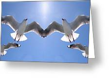 Six Heavenly Backlit Seagulls Flying Overhead In Blue Sky. Greeting Card