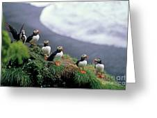 Six Puffins Perched On A Rock Greeting Card