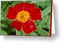 Sixlets Light Maroon Flower Greeting Card