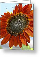 Sizzling Hot Sun Flower Greeting Card