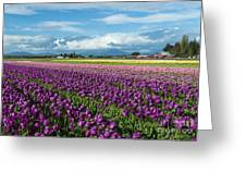 Skagit Tulip Storm Greeting Card