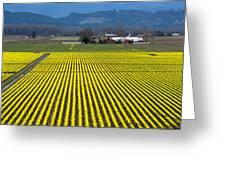 Skagit Valley In Springtime Greeting Card