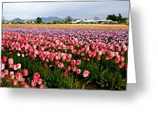 Skagit Valley Tulip Festival Greeting Card