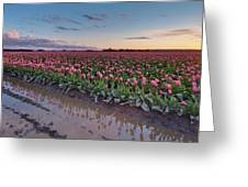 Skagit Valley Tulip Reflections Greeting Card