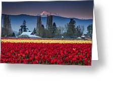 Skagit Valley Tulips-mt. Baker Greeting Card
