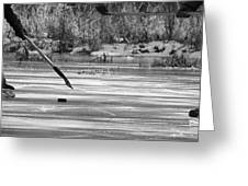 Skating On The Pond Greeting Card