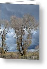 Skeleton Trees Greeting Card