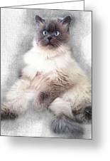 Sketch Of Regal Himalayan Cat - Not Greeting Card