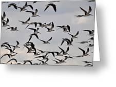 Skimmer Sky Greeting Card