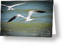 Skimmers In Flight Greeting Card