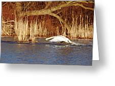 Skimming The Water I Greeting Card