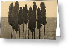 Skinny Trees In Sepia Greeting Card