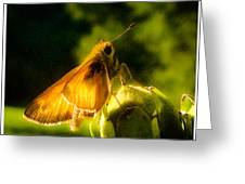 Skipper Butterfly With Sun Shine Greeting Card