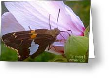 Skipper Butterfly With White And Orange Colors Greeting Card