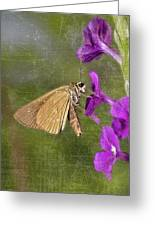 Skipper Butterly Sipping Nectar Greeting Card