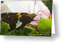 Skipper  Greeting Card