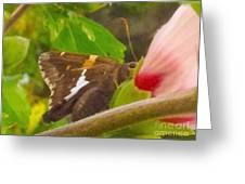 Skipper Trying To Hide Behind A Flower Greeting Card