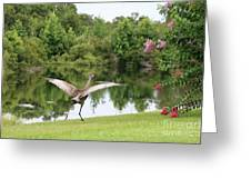 Skipping Sandhill Crane By Pond Greeting Card