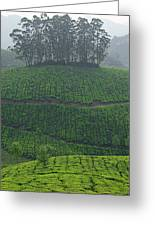 Skn 6550 From Tea's Perspective. Color Greeting Card