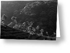 Skn 6707 Tree Parade. B/w Greeting Card