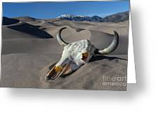 Skull At The Great Sand Dunes Greeting Card